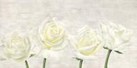Classic Roses Fine-Art Print