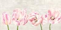 Classic Tulips Fine-Art Print