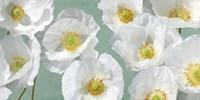 Poppy Arrangement (Mint) Fine-Art Print