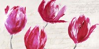 Crimson Tulips Fine-Art Print