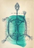 Memories of the Wild I Fine-Art Print
