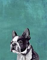 Frenchie Puppy Fine-Art Print