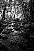 Lush Creek in Forest BW Fine-Art Print