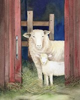 Farm Family Sheep Fine-Art Print