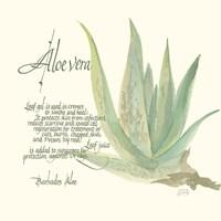 Aloe Vera Fine-Art Print