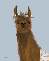 Delightful Alpacas II Fine-Art Print