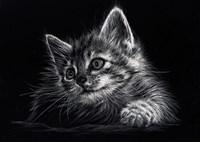 Kitten Fine-Art Print