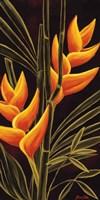 Heliconia Fine-Art Print