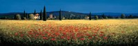 Tuscan Panorama - Poppies Fine-Art Print