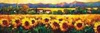 Sweeping Fields of Sunflowers Fine-Art Print