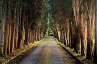 Tree Tunnel Fine-Art Print