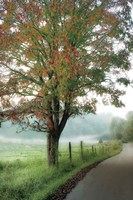 Almost Autumn Fine-Art Print