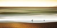 Golden Shores Fine-Art Print