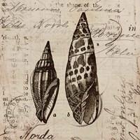 Ocean Collection III Fine-Art Print