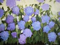 Purple and Blue Hydrangeas Fine-Art Print
