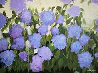 Purple and Blue Hydrangeas Fine-Art Print