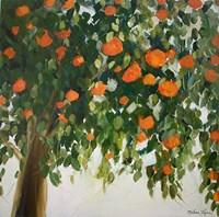 Orange Tree Fine-Art Print