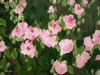 Pink Roses Fine-Art Print