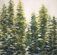 Trees Fine-Art Print