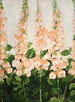 Peach Foxglove Fine-Art Print