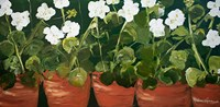 Pots of Geraniums Fine-Art Print