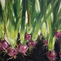 Red Onions Fine-Art Print