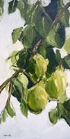 Pear Tree Branch Fine-Art Print