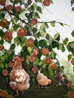 Apples and Chickens Fine-Art Print