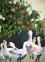 Apples and Ducks Fine-Art Print
