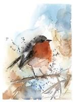 Robin II Fine-Art Print