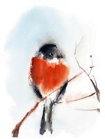 Robin III Fine-Art Print
