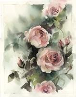 Blush Roses III Fine-Art Print