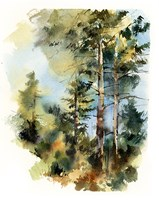 Trees in the Forest Fine-Art Print