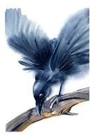 Crow Fine-Art Print