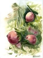 Pomegranate Fine-Art Print