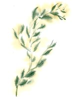 Vine III Fine-Art Print