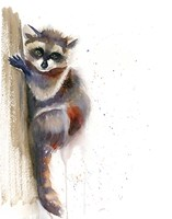 Raccoon II Fine-Art Print