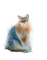 Ginger Cat II Fine-Art Print
