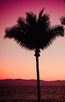 Pink Palm Fine-Art Print