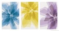 Three X-Ray Flowers Fine-Art Print