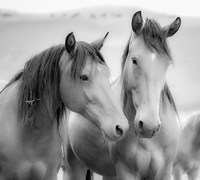 Horse Friends Fine-Art Print