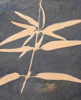 Blue XIII Fine-Art Print