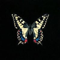 Butterfly on Black Fine-Art Print