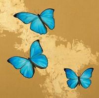 Cerulean Butterfly II Fine-Art Print