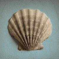 Seashell Study II Fine-Art Print