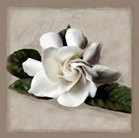 Botanical Gardenia Fine-Art Print