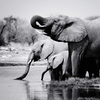 Namibia Elephants Fine-Art Print