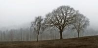 Autumn Fog Fine-Art Print