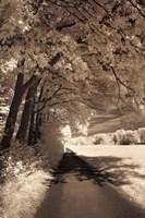 The Path Ahead Fine-Art Print