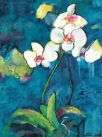 Phalaenopsis II Fine-Art Print